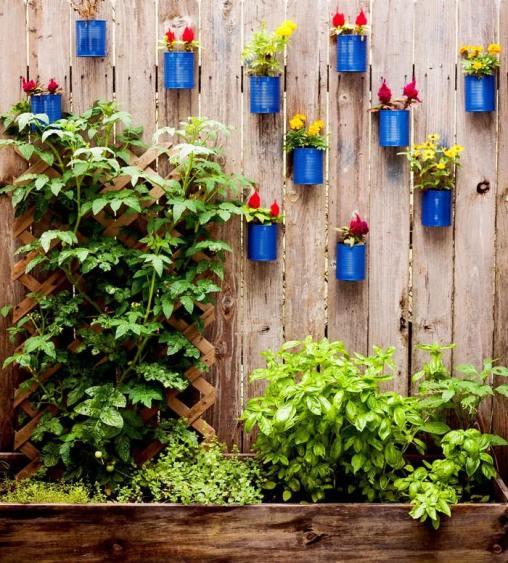 plant fence