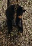 Bears_0534