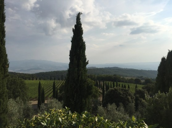 Cypress, olive trees and vineyards