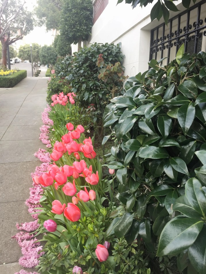 Tulips_pathway