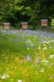 The Tomsons' beehives