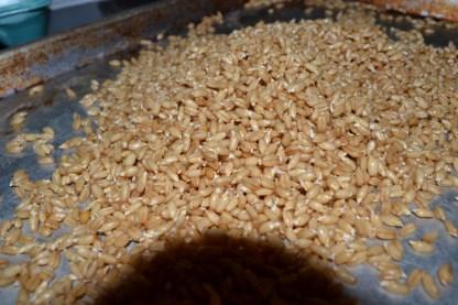 wheat 007