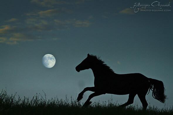 7 tolle Ideen fr traumhafte Pferdeshootings  Herzenspferd