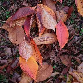Fallen Leaves © Stefanie Neumann - All Rights Reserved.