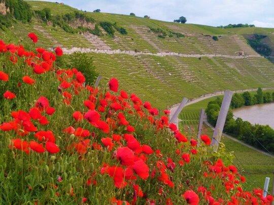 Bed & Wine Weinort Hessigheim
