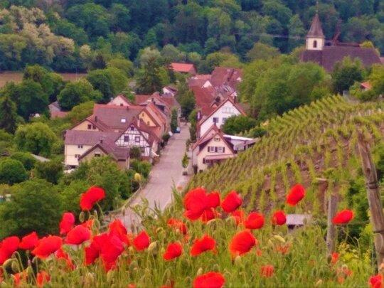 Ortseingang Hessigheim Bed & Wine Weinproben in Hessigheim