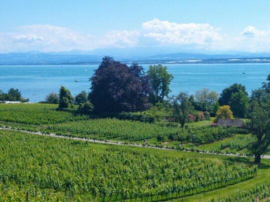 Weinanbaugebiet Baden Seewein am Bodensee