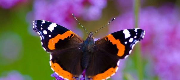 Team-Moderation wie Schmetterlinge: Sie sind ein Musterbeispiel für gelungene Veränderung