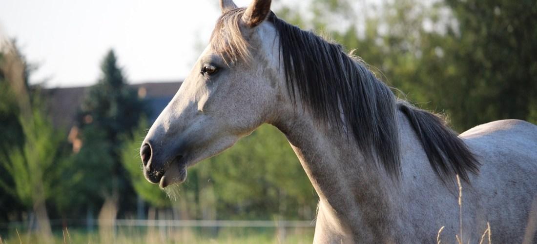 Grænser og personligt rum – og hvordan hestefolk ender i godbidsfælden..