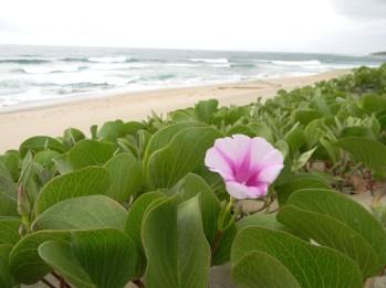 Coastal growth KwaZulu-Natal Southcoast