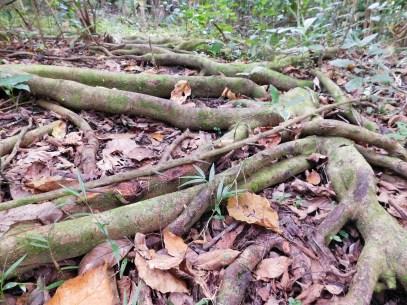 Bendigo Nature Reserve forest floor
