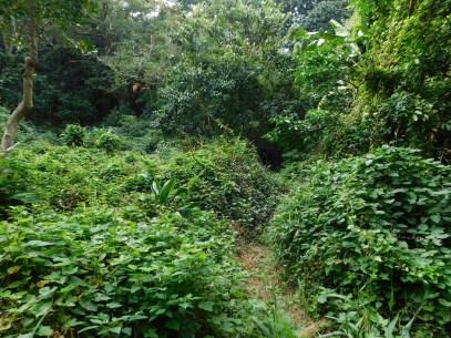 Bendigo Nature Reserve hiking trail3