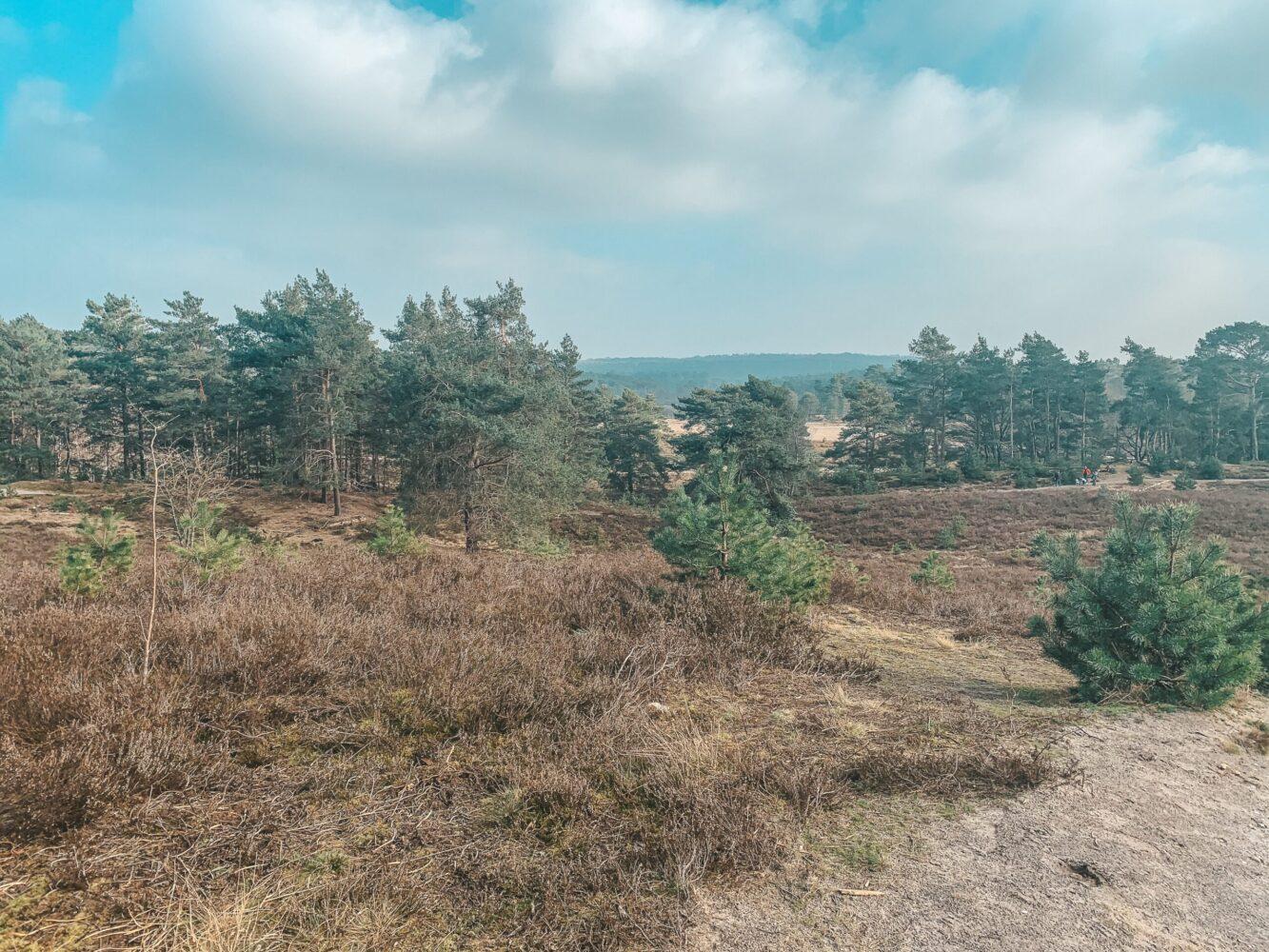 Het Gezinsleven - Uitstapjes - Bezienswaardigheden - Top 10 Bezienswaardigheden in Limburg - Brunssummerheide uitzicht foto