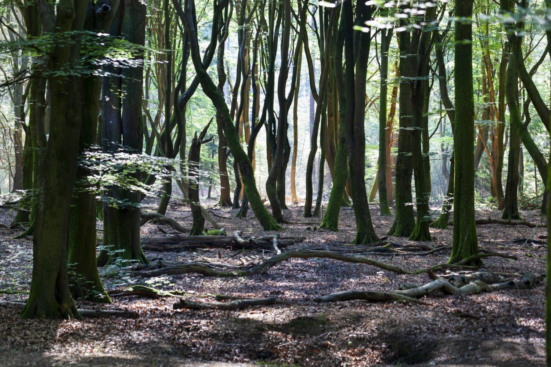 Het Gezinsleven - Uitstapjes - Natuur - Kom tot rust in de natuur in Gelderland - Boswachterij Speulder- en Sprielderbos