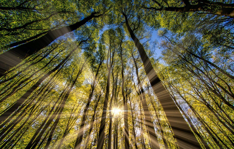 Het Gezinsleven - Lifestyle - Mindset - 5 tips voor meer energie! - Geniet van de zon die door de bomen schijnt.