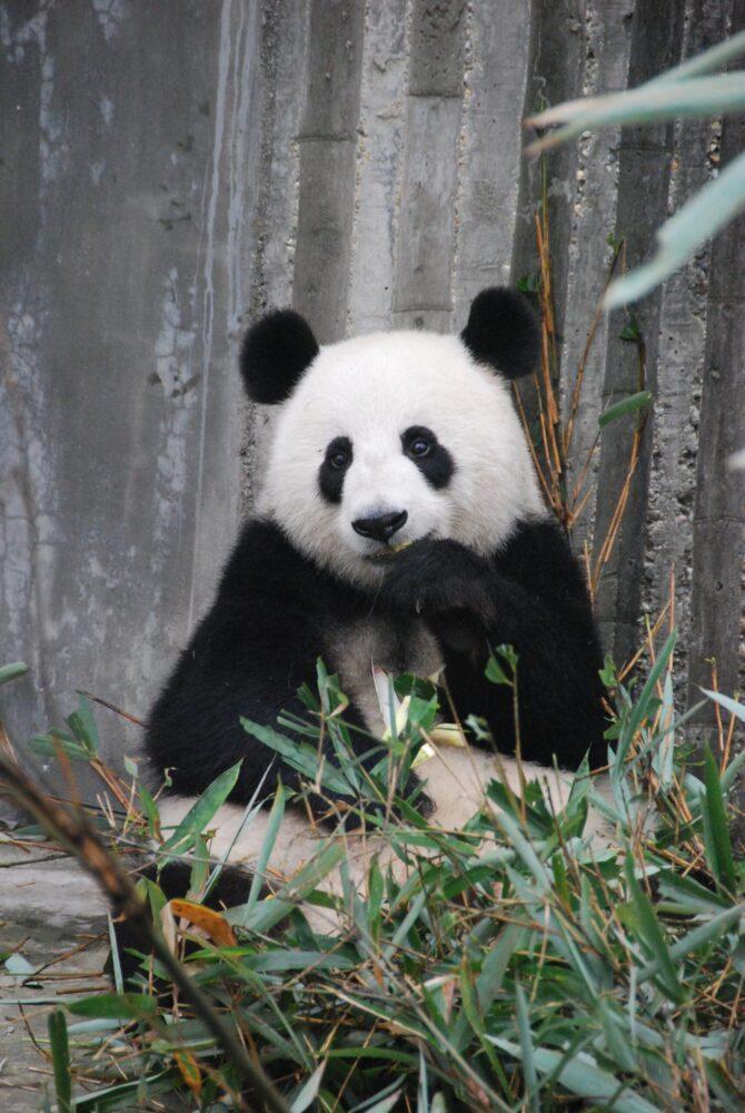 Het Gezinsleven - Lifestyle - Gezondheid en verzorging - Slapen met make up op, is dat echt zó erg? - Ogen als een pandabeer