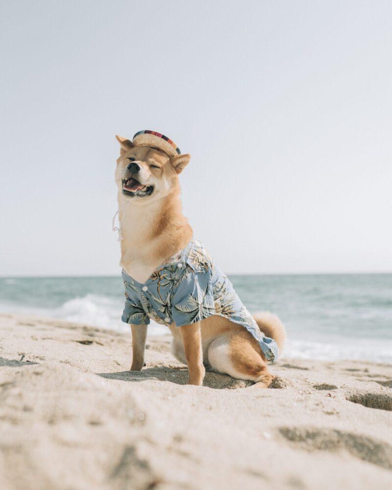 Het Gezinsleven - Lifestyle - Huishouden - Huisdieren - Je hond meenemen op vakantie? Lees hier wat je niet wilt vergeten! - Samen op het strand