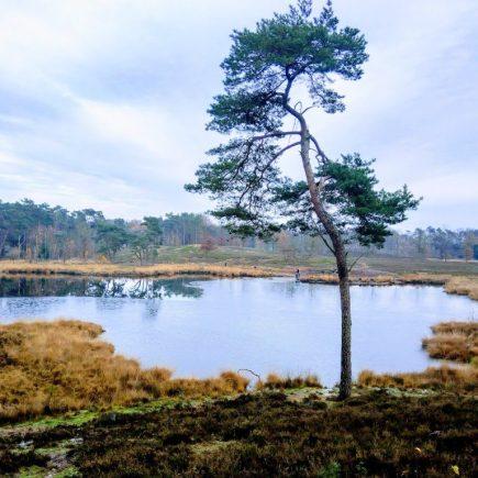 Boom voor een waterplas