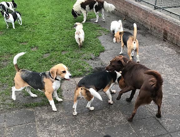 hondenspelen