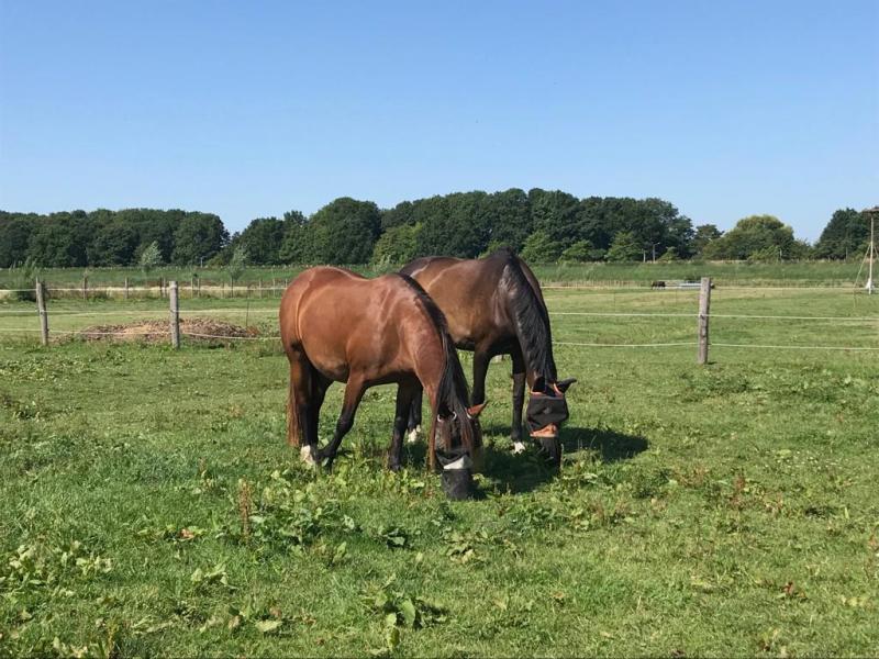 Paarden op de boerderij in Poortugaal