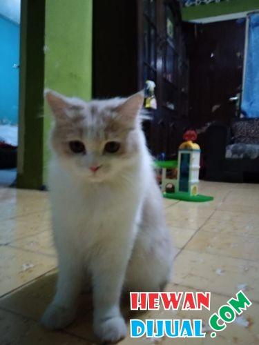 Cara Membedakan Kucing Jantan Dan Betina : membedakan, kucing, jantan, betina, Gambar, Kucing, Betina, 81021+, Untuk, Comel,