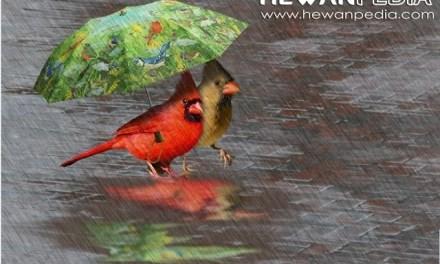 Cara Merawat Burung Berkicau Di Musim Hujan