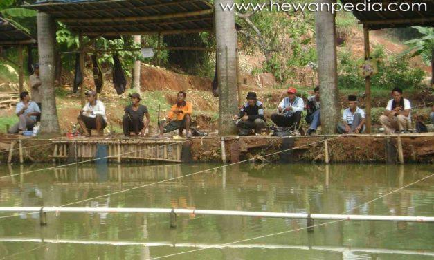 Sistem Mancing di Kolam Pemancingan