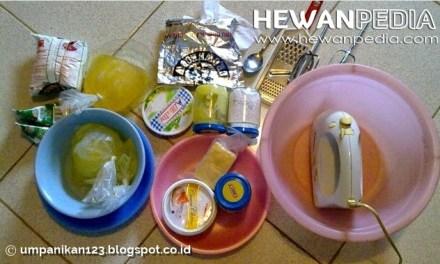 Resep Umpan Mancing Ikan Air Tawar