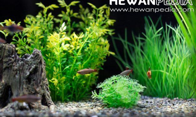 6 Tahap Membuat Aquarium Ikan Hias Air Tawar