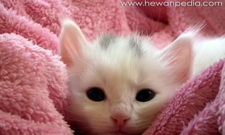 60 Inspirasi Nama untuk Kucing Peliharaan