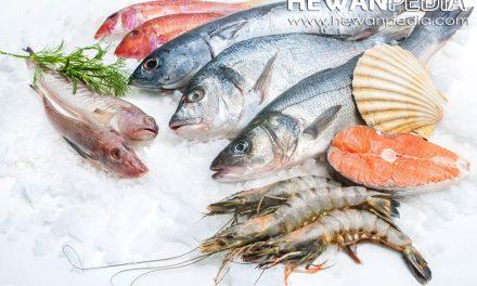 7 Tips Sederhana Cara Memilih Ikan Segar