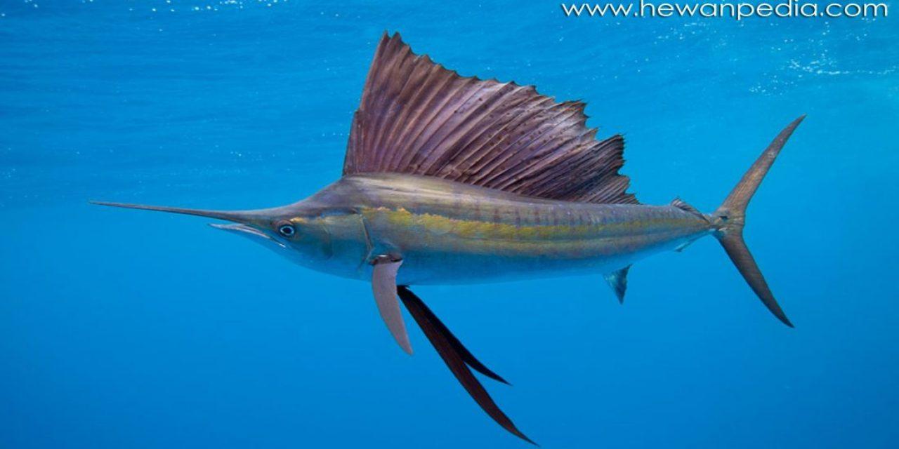 6 Ikan Tercepat di Dunia
