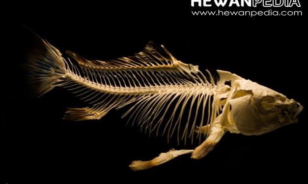 Pengertian Ikan dan Mengenal Berbagai Ciri Fisik Ikan