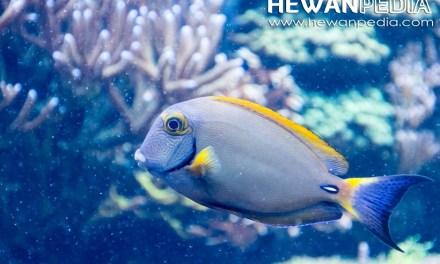 6 Cara Terbaik untuk Memelihara Ikan Hias