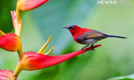 5 Burung Nasional Tercantik di Dunia