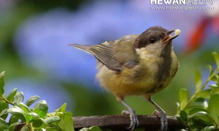Manfaat Menjemur Burung Peliharaan di Pagi Hari