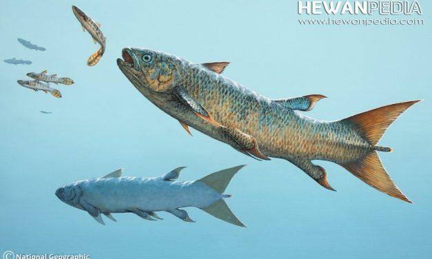 Ikan Purba Rebellatrix