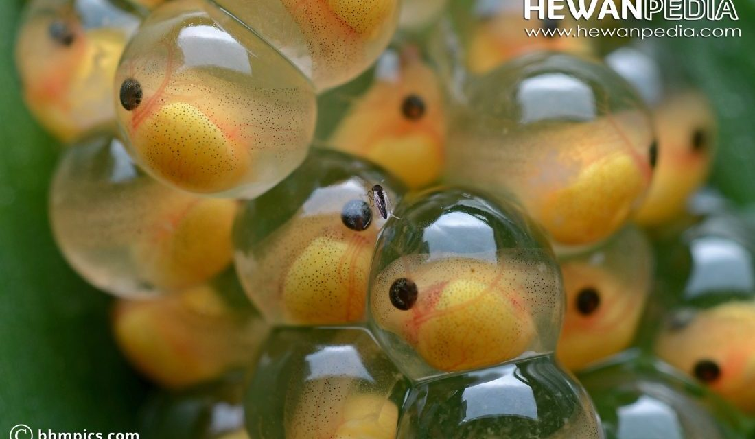 Kenali 7 Penyebab Telur Ikan Gagal Menetas - Hewanpedia