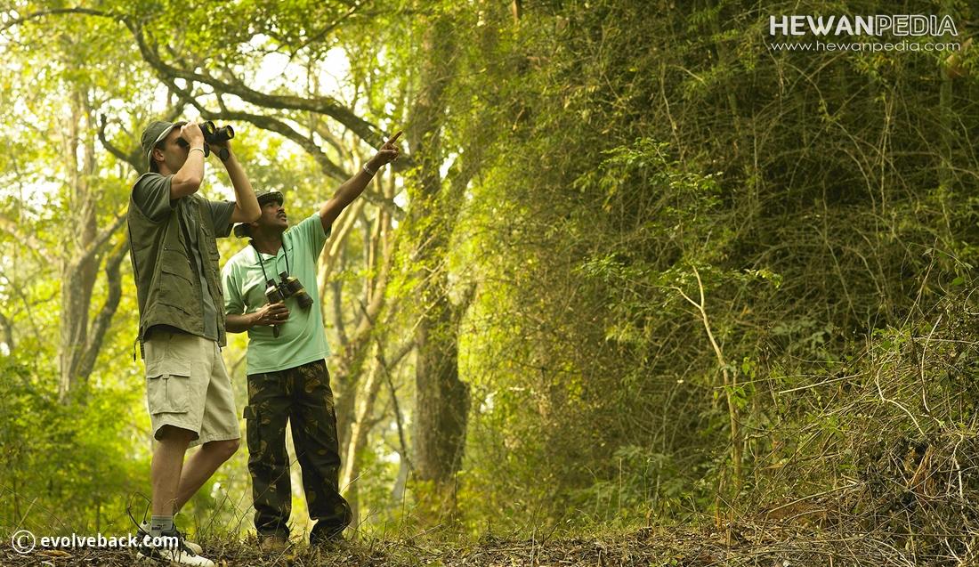 10 Tips Pemula untuk Melakukan Kegiatan Birdwatching atau Pengamatan Burung