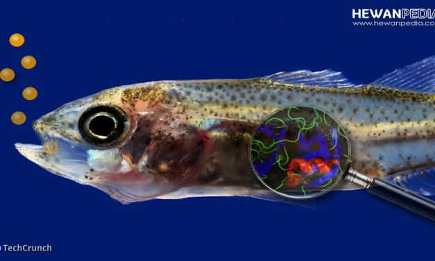 Kenali Pentingnya Komposisi Pakan Ikan bagi Ikan