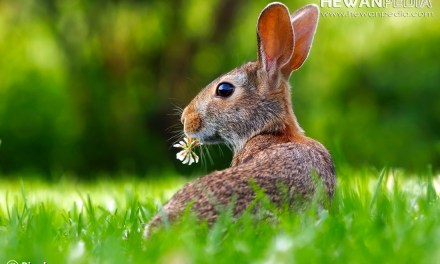 4 Makanan Terbaik untuk Kelinci