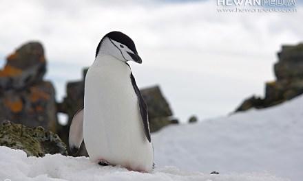 Penjelasan Habitat di Kutub