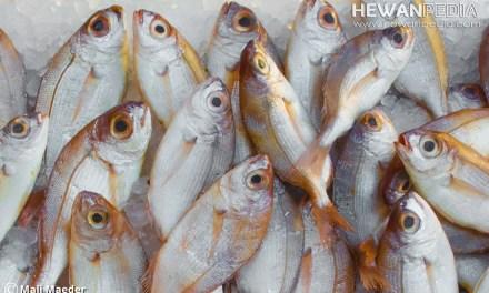 8 Macam Bahan Pengawet Ikan Alami