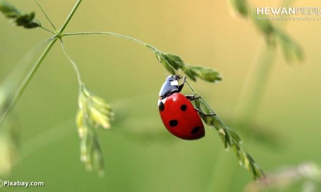 Mitos Serangga yang dipercaya Membawa Keberuntungan