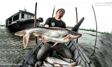 8 Umpan Mancing Ikan Patin Paling Cocok dan Cara Membuatnya