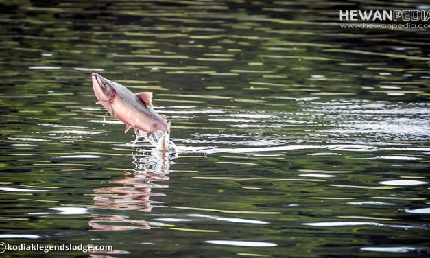 Kriteria Sungai dan Jenis Ikan Yang Baik Untuk Budidaya