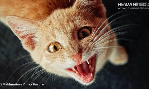 Perkiraan Harga Kucing Mei 2018 Segala Jenis dan Usia