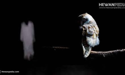 Kebenaran Mitos Burung Hantu Mendatangkan Makluk Halus dan Tanda Penampakan