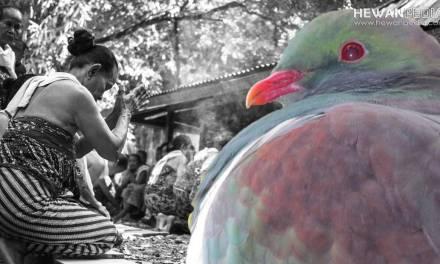 11 Mitos yang Berhubungan dengan Hewan yang Berkembang di Tanah Jawa