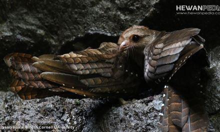 Jenis Burung dan Hewan yang Dapat Mendengar Bunyi Ultrasonik